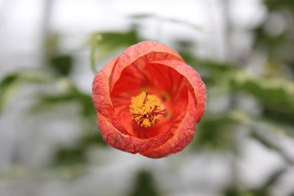 Orange Flower Allen Gardens Conservatory